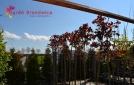 drzewa-parkowe-alejowe-2