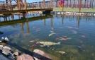 ogrod-brandwica-ryby-rosliny-wodne-3