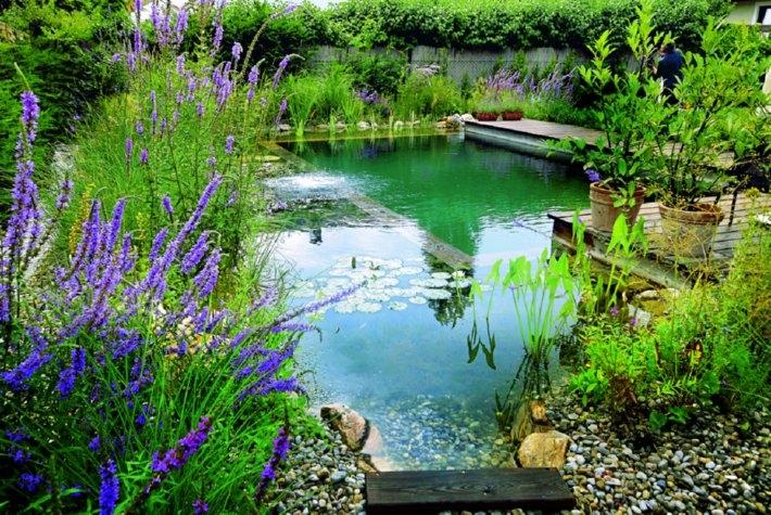 Stawy k pielowe projekt i budowa naturalnych staw w for Garden pond do you need a pump